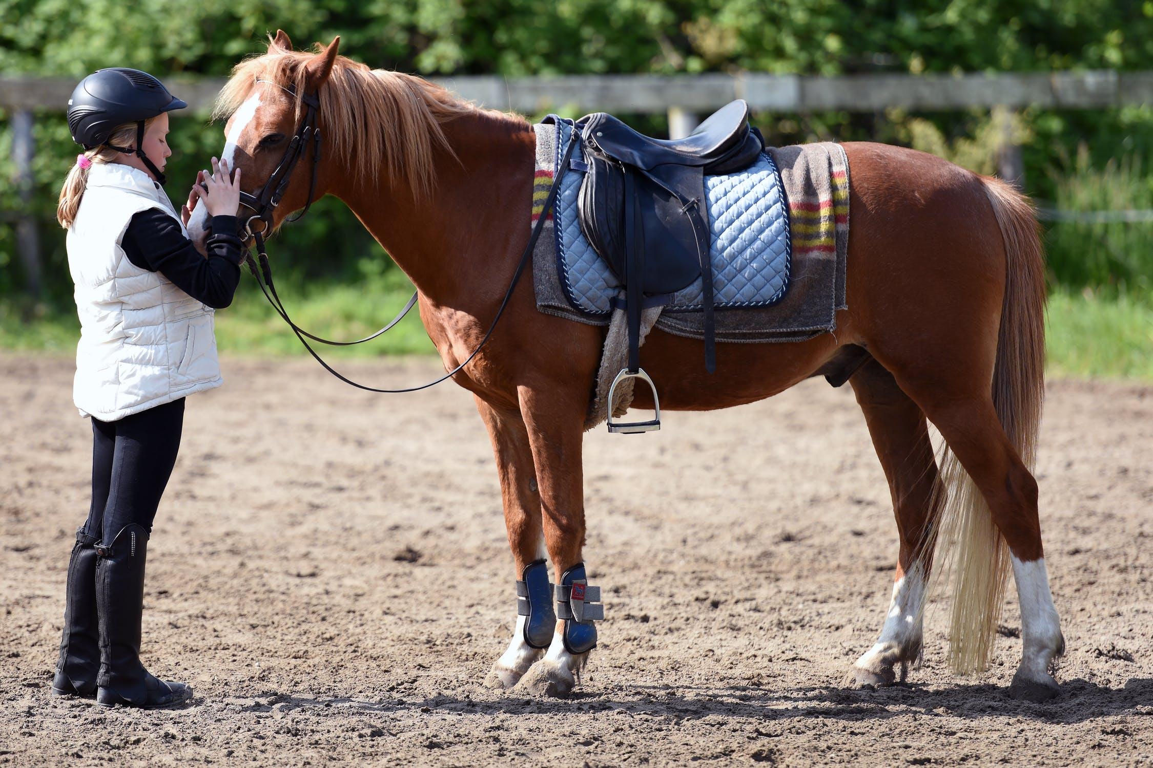 La cursa de cavalls
